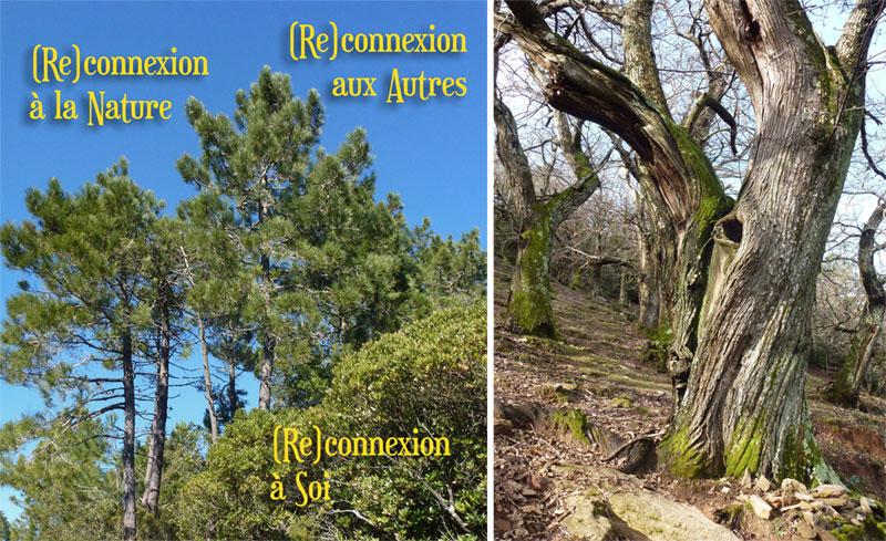 reconnexion nature